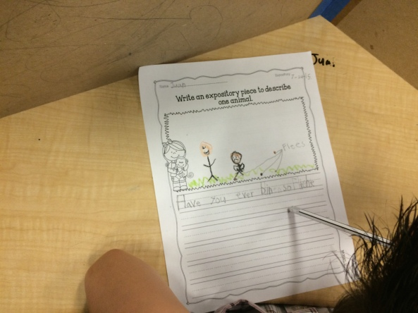 "Love the 1st grader who is writing about animals and choose Flees!  Great opening, ""Have you ever been so itchy..."""